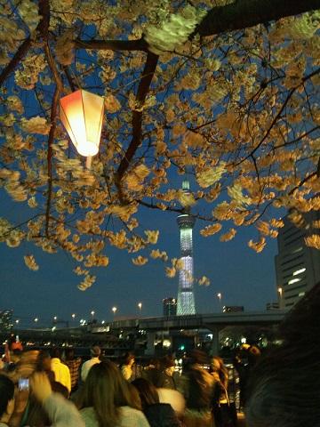 20130331用・桜