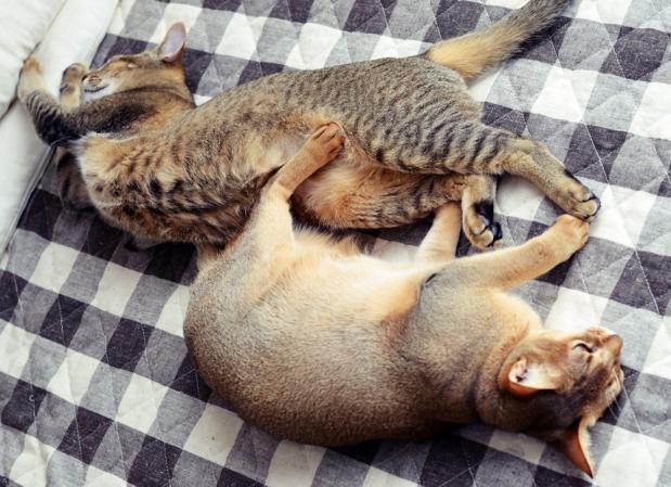 二匹で昼寝