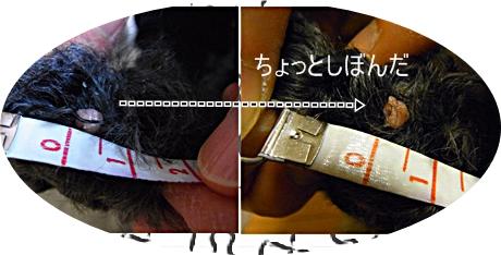RIMG7041のコピー