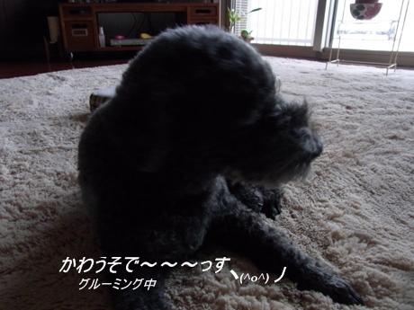 RIMG7072.jpg