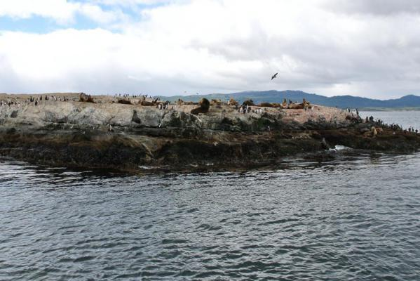 Seal's Island (Isla de los lobos)
