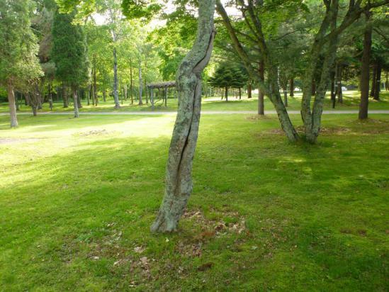 シジュウカラの営巣木