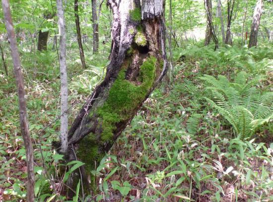 オオルリの営巣環境