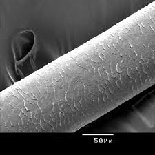 cuticle1.jpg