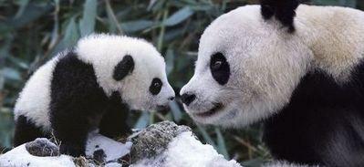 panda_20130615222101.jpg