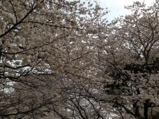 shinkawapark1.jpg