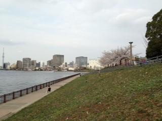 shinkawapark2.jpg