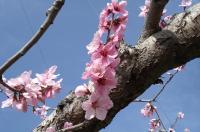 springcome.jpg