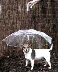 wanumbrella.jpg