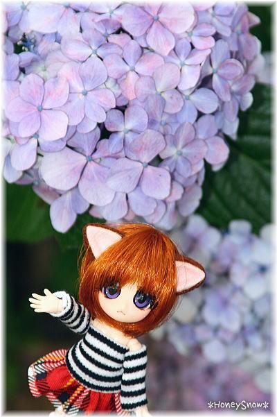 紫陽花とモモタン♪