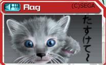 Rag様作 可愛い猫