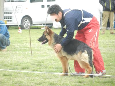 dog2_convert_20130318211840.jpg