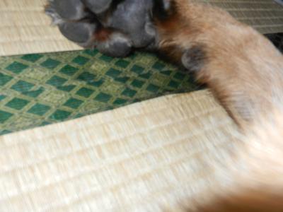 tatami_convert_20130113205501.jpg