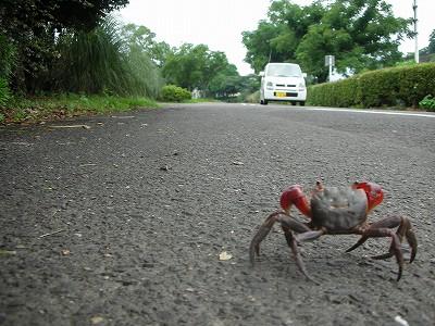 Crabe ewe - Page 14 20070721kjkurumagakita