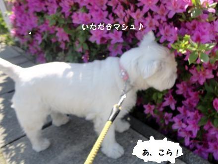 DSC01360_convert_201306050657461.jpg