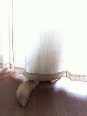 curtain_back