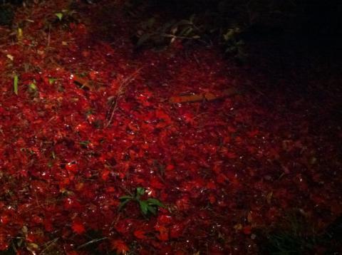 12_11_15_leaves2