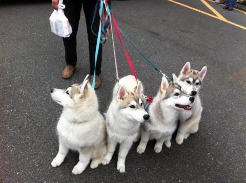 12_12_30_pups