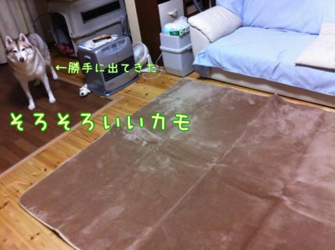 12_12_5_yaji3