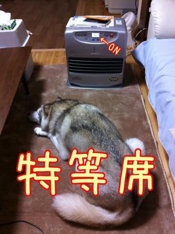 12_12_5_yaji5