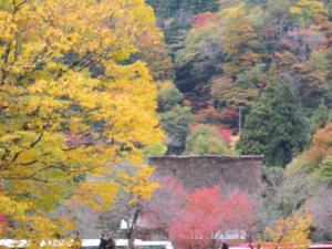 2012 11月白川郷&高山 275