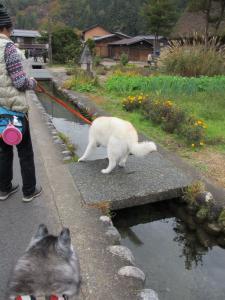 2012 11月白川郷&高山 244