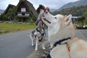 2012 11月白川郷&高山 032