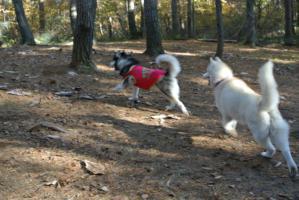 2012 11月白川郷&高山 223