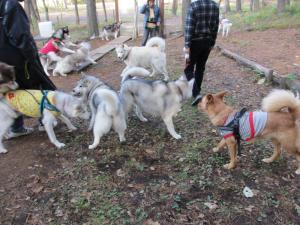 2012 11月白川郷&高山 350