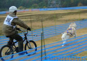 2012 11月ギグレース 251