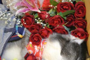 2012 11月12月ロシェ葬儀 021a