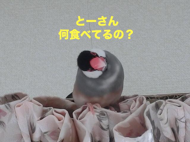 何食べているの?