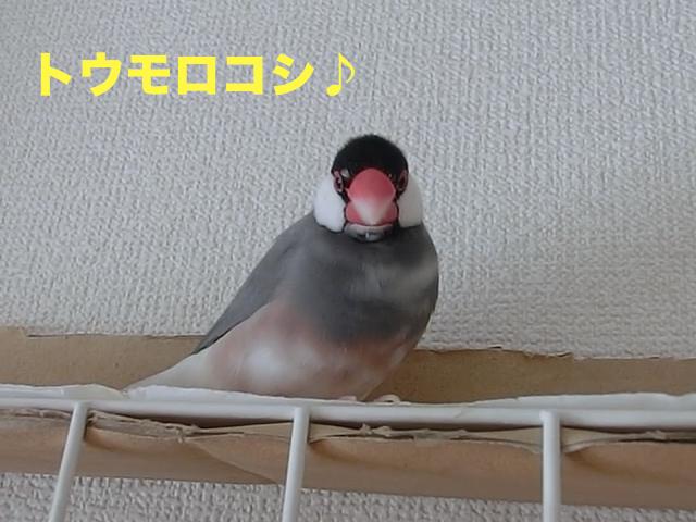 トウモロコシ♪