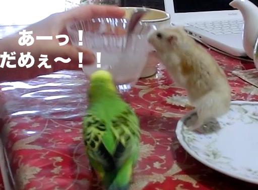 だめ〜!!