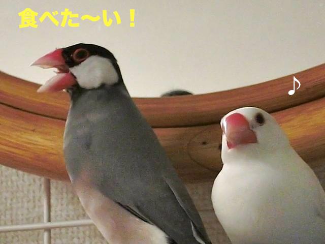 食べた〜い!!