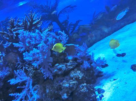八景島熱帯魚