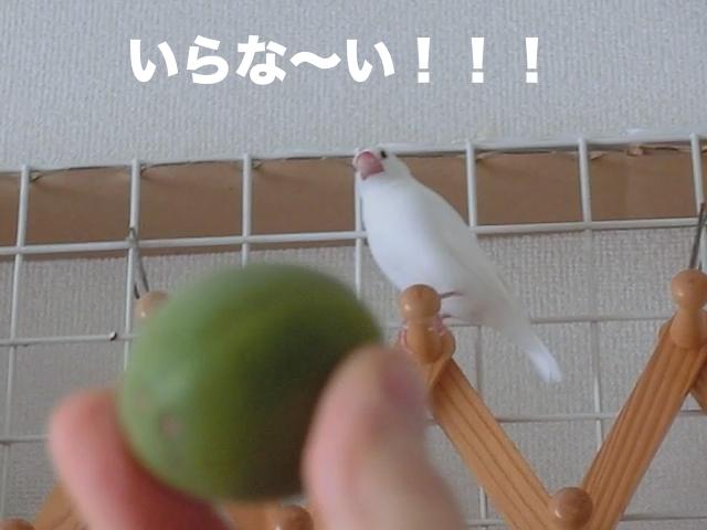いらな〜い!!