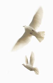 平和のシンボル、はと