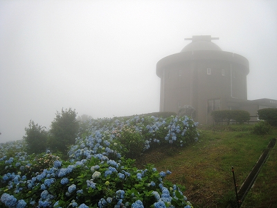 大野山頂のアジサイ・天文台