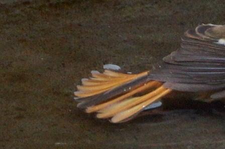 watermarked-DSC02696 (3)