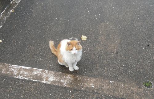 今日のネコ2