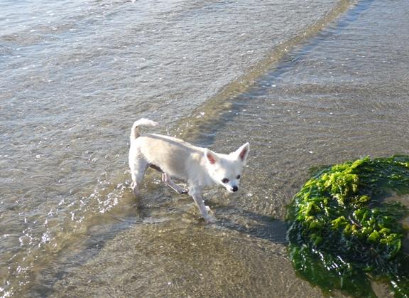 チワ、やっと陸に着いたと思ったら、そこは中州でした。ふふ、砂浜はまだ遠いよ。