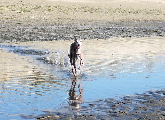トトも、最初だけちょっと躊躇いましたが、一度水に入ってしまえば大丈夫。
