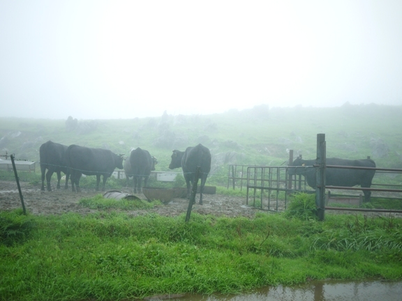 牛って寒くないのかな~?冬はかなり雪が降る場所だし。