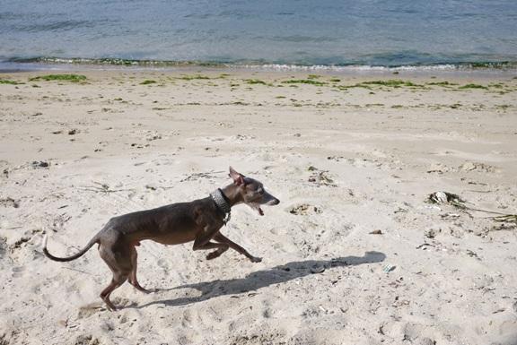 満潮だったので、砂浜が狭かった。。。