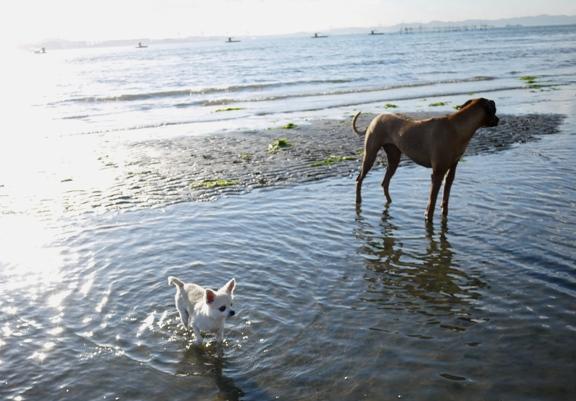 中州から、砂浜へ戻りたいチワ
