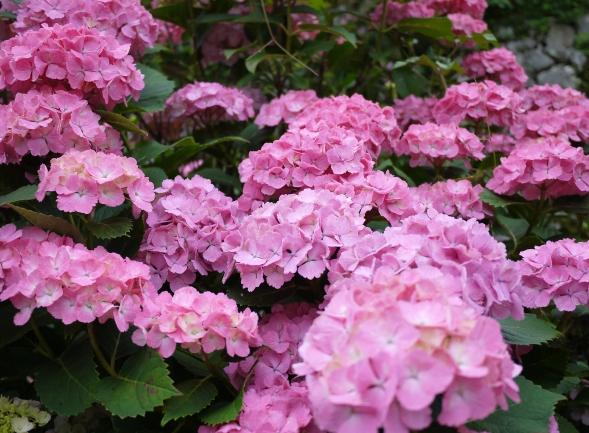 ピンク・白・青・紫、色とりどりでした~♪