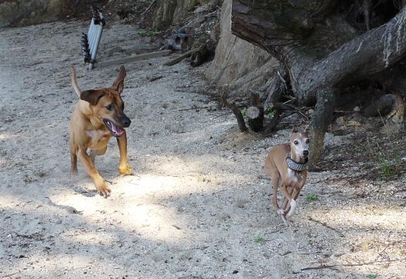 シャロリーとディオっち以外はほとんど走らなかった。。