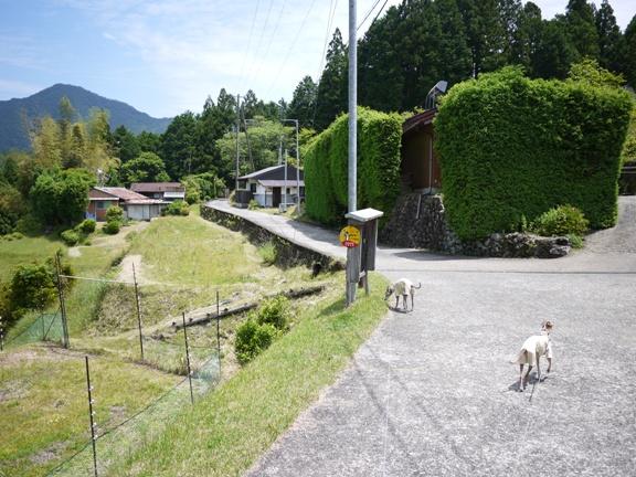 普通の生活道に見えるけど、これもちゃんと熊野古道