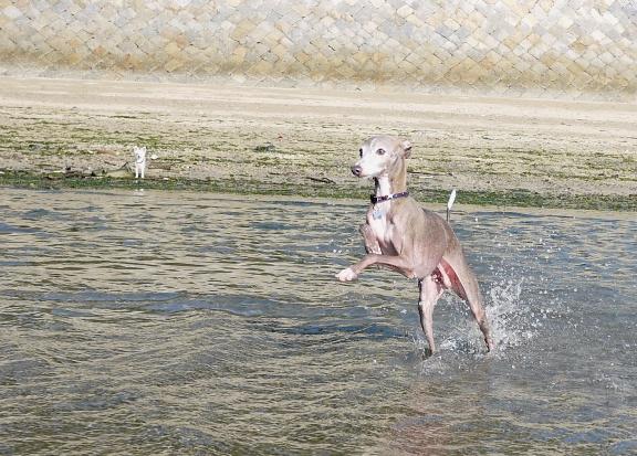 バッシャバッシャと走るので、水しぶきからカメラを守るのに必死!